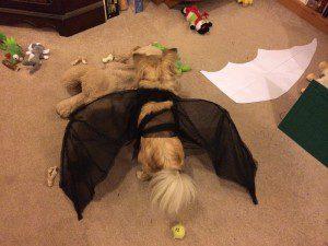 Chloe back view of tied wings