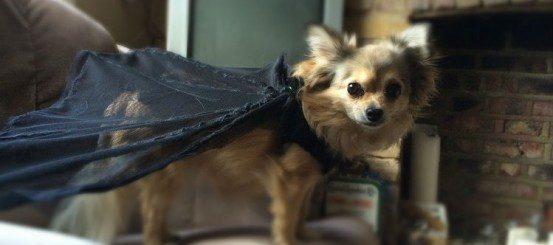 The Hunter's Kind Cosplay: How to Turn Your Dog into Rii