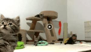 kitten-cam