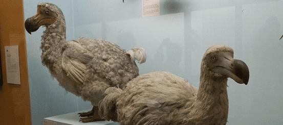 The Dodo! A Comprehensive Overview
